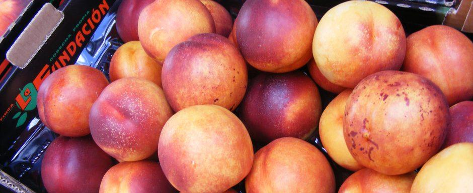 marona.cat holiday in Sant feliu de Guixols, fresh fruit